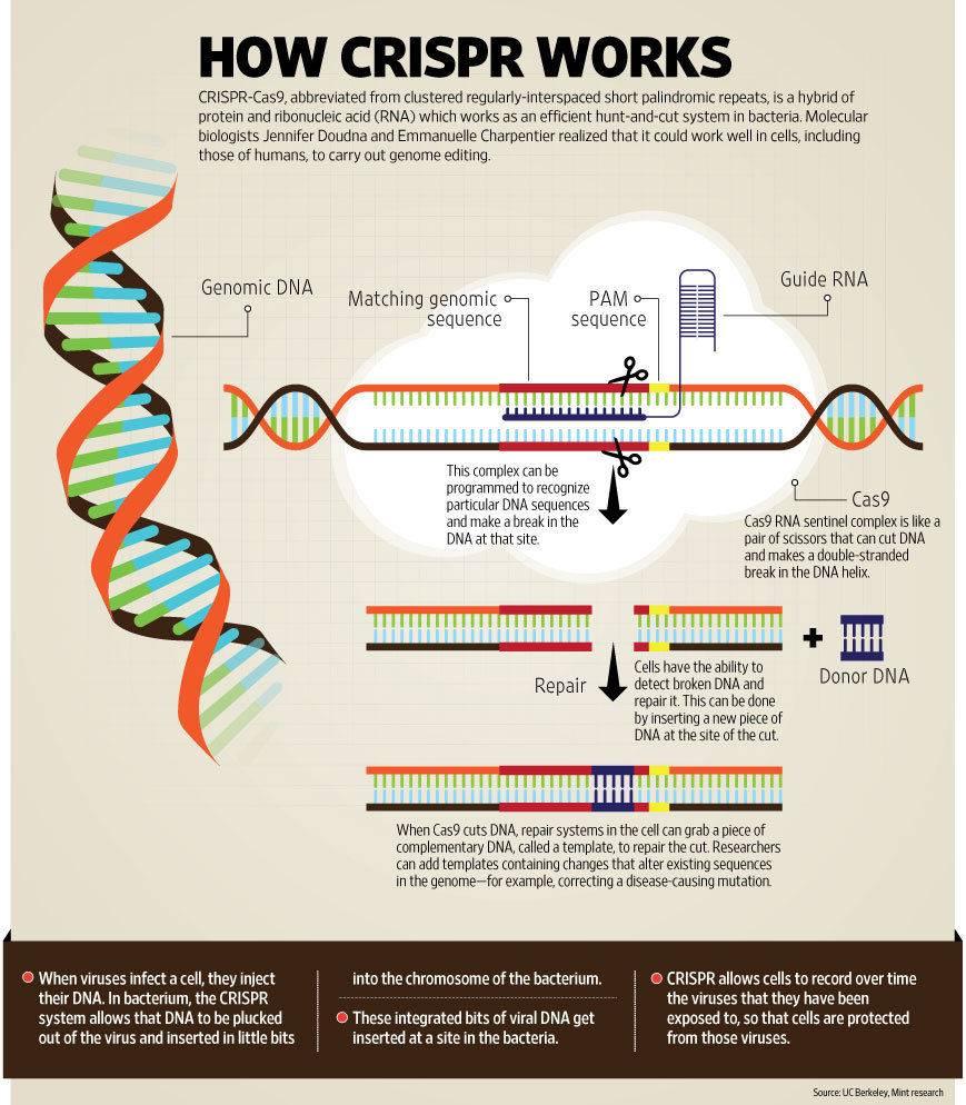g-CRISPR_web.jpg