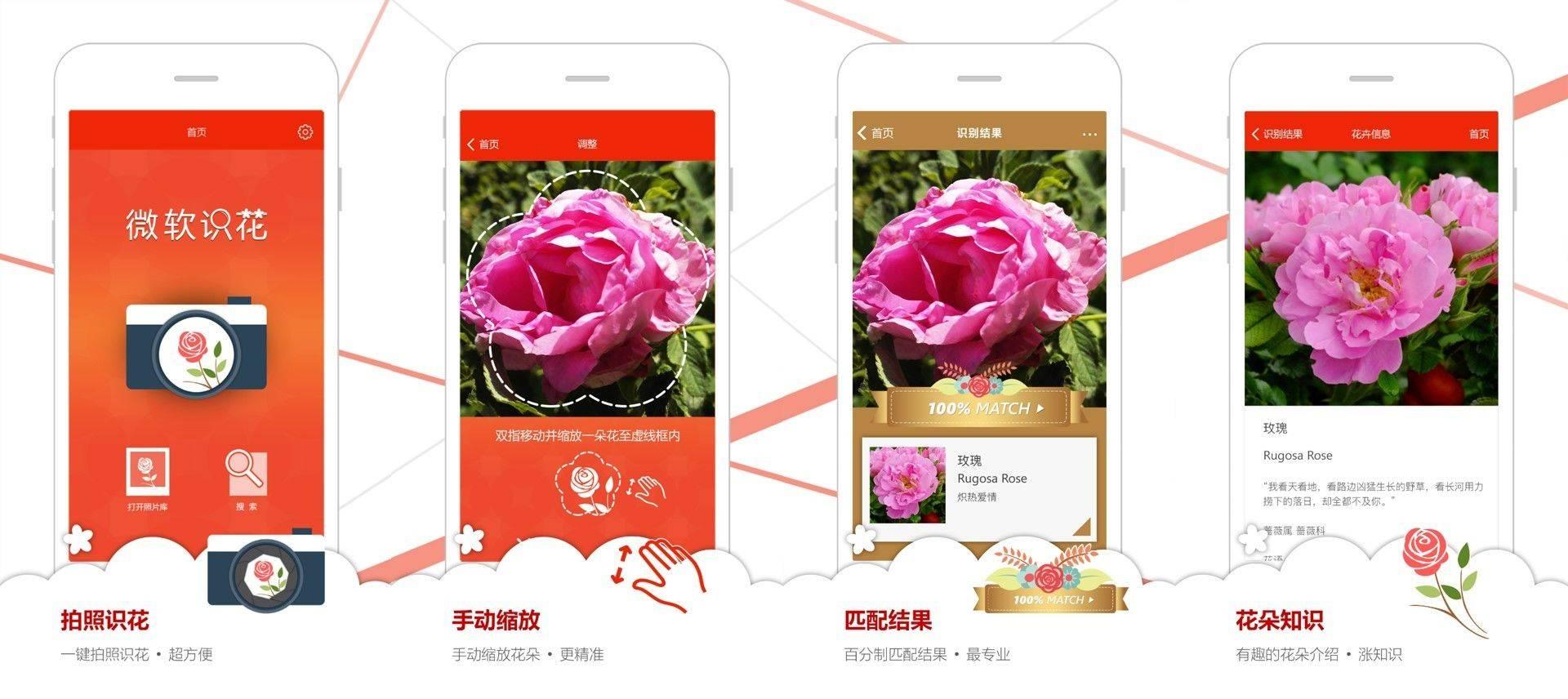 Microsoft Flower Reco (2).jpg