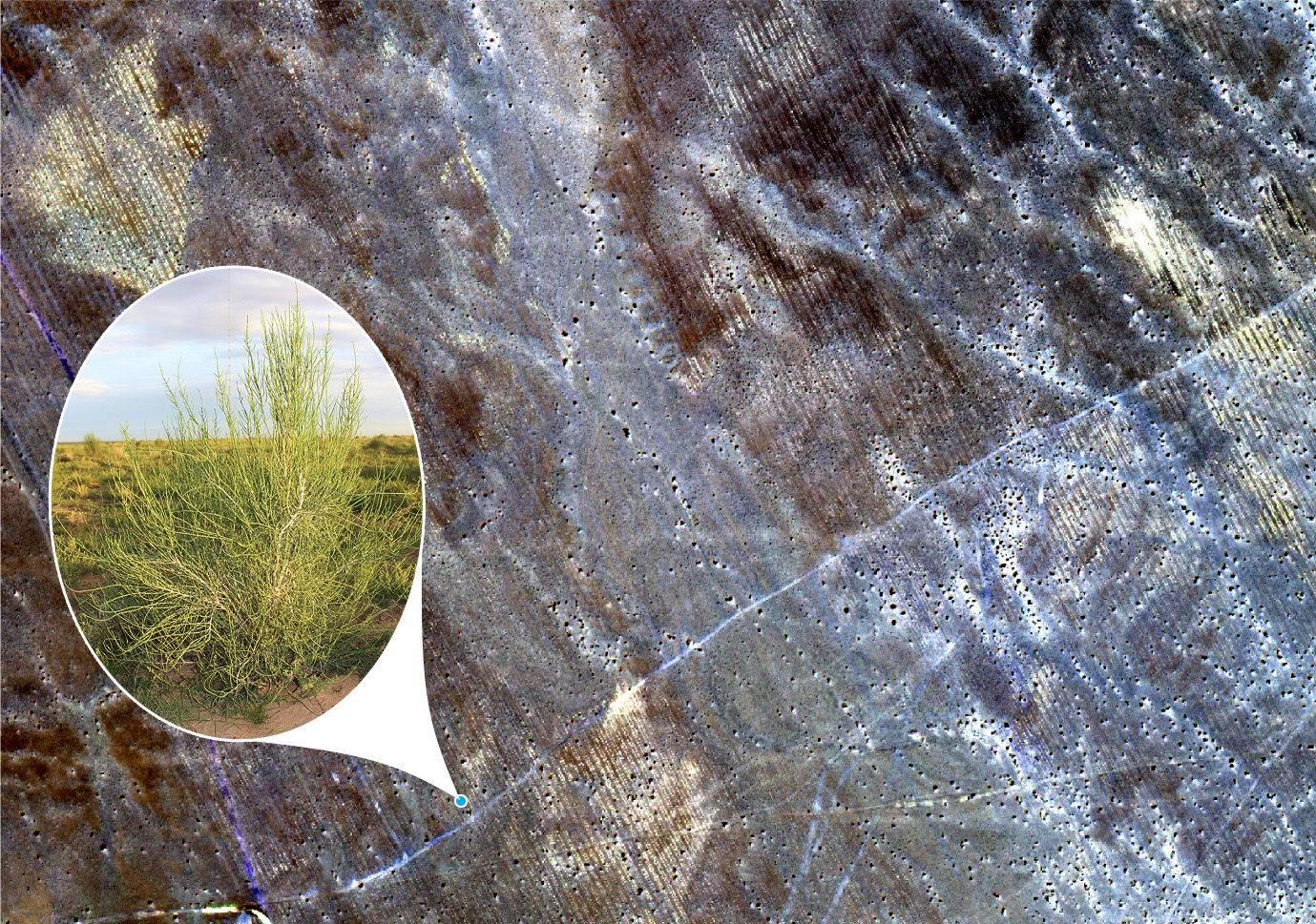 蚂蚁森林卫星图.jpg